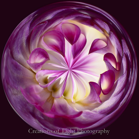 Spirals of Life V