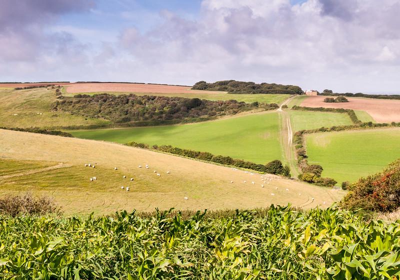 Sheep fields on Dorset hills