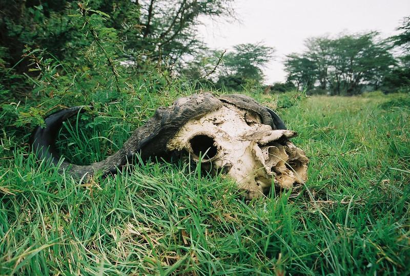 Kenya - 32.jpg