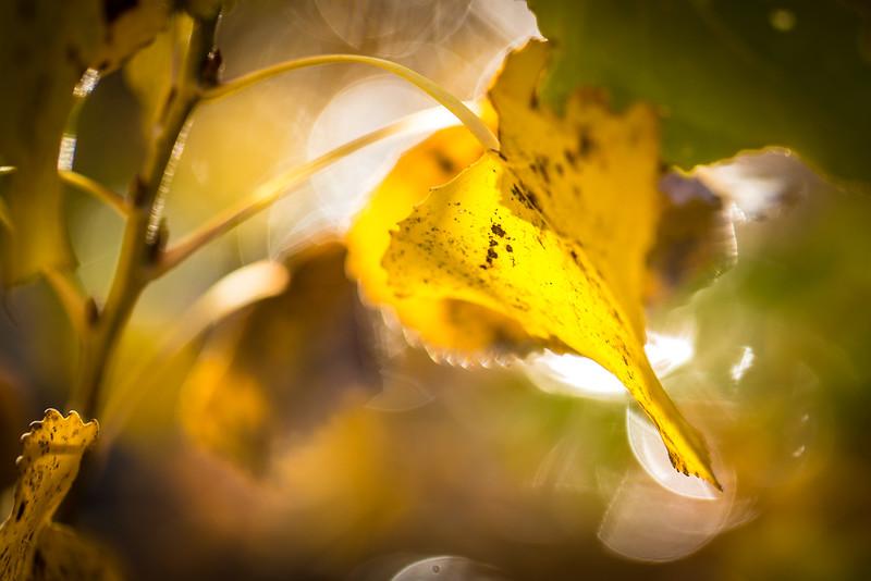 20151024-Fall Colors-46.jpg