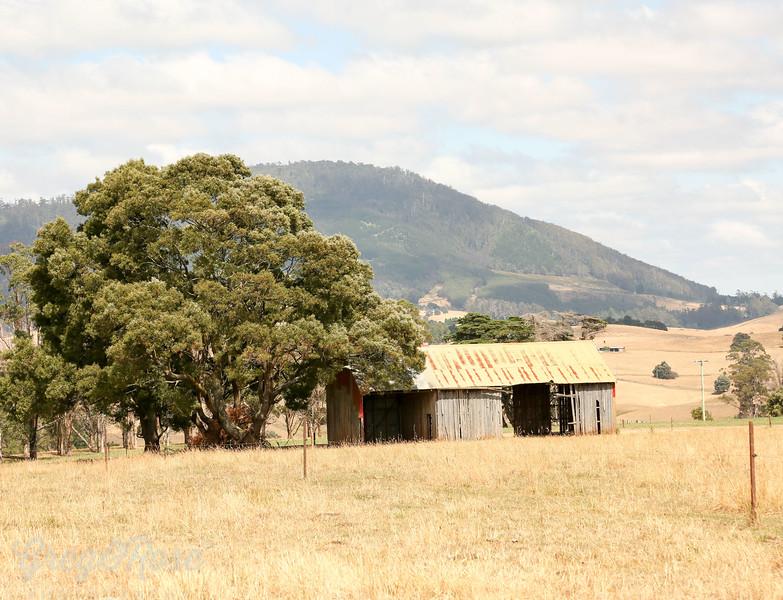 Abandoned House tree and Mountain Backdrop . Tasmania
