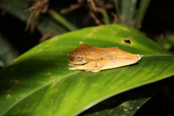 Amazon Rainforest Trek
