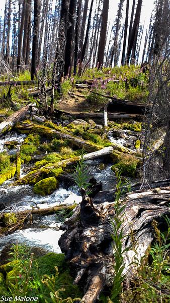 08-18-2020 Boundary Springs Hike-12.jpg