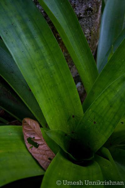 Costa Rica 249.jpg