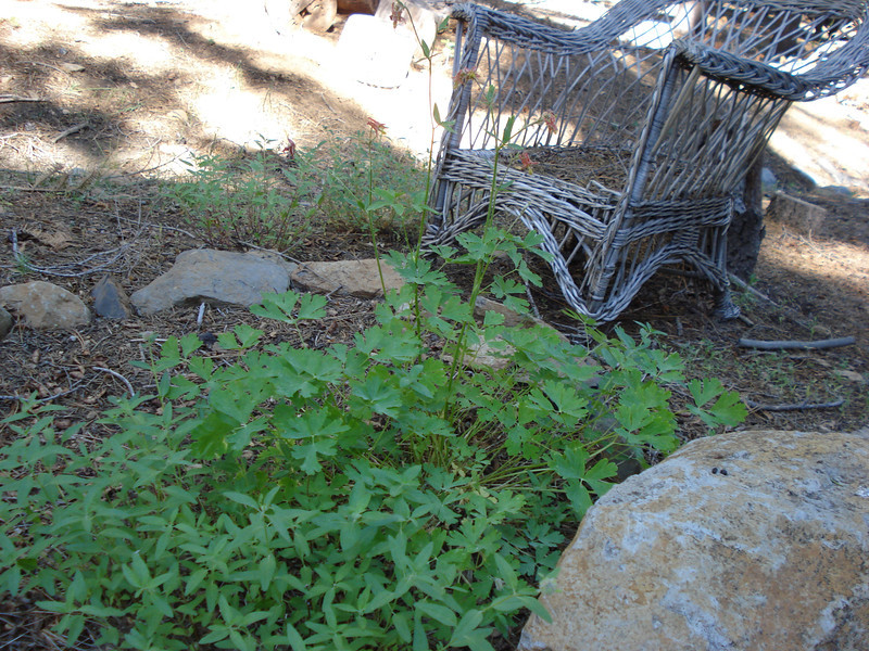 Backyard Garden Project 06-19-2014