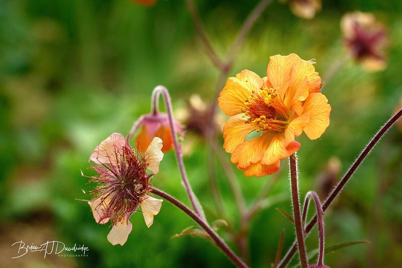 Garden Macros-8582 - 8-55 am.jpg