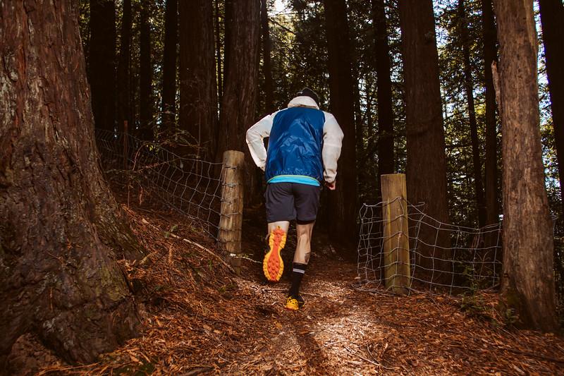 DT_redwoods_Jussioksanen_edited-2737.jpg