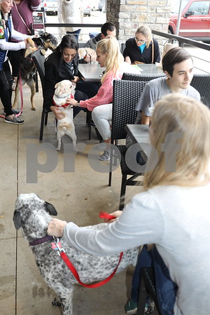 3/15/18 Pooches On The Patio by David Thomas