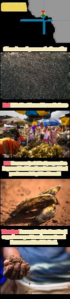 Ghana ABT.png