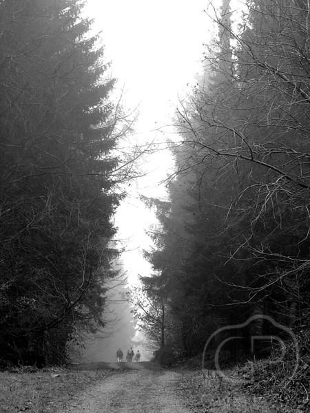 Forest_Of_Dean.jpg