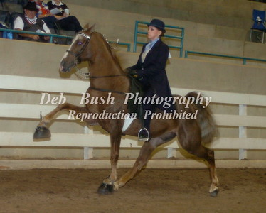CLASS 15  SCWHA MEMBERS ONLY AMATEUR SPECIALTY