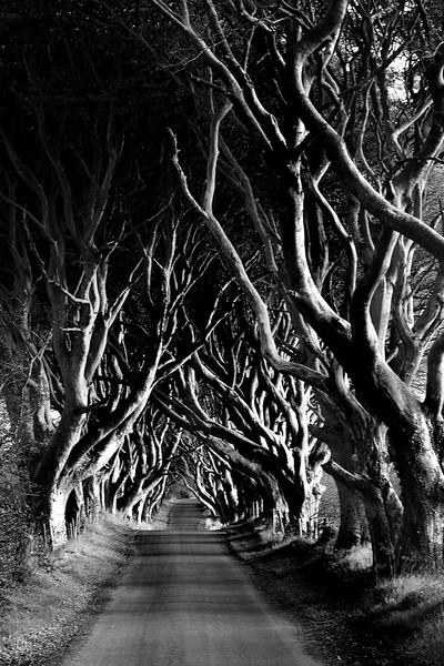 Trees7 16 x .jpg