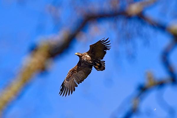 Utlängan april 2016 - Fåglar