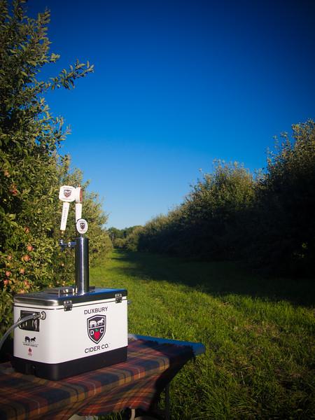 duxbury cider in field 4.jpg