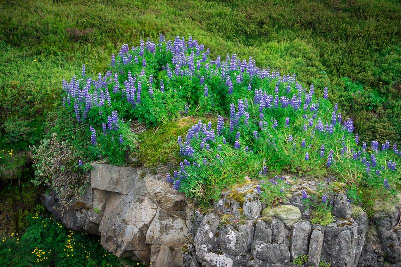 West-Iceland-133.jpg