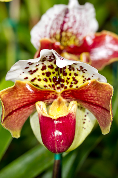 SF_Orchid_Show-29.jpg