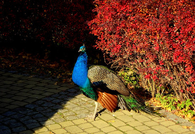 Zoo Opole autumn 2011