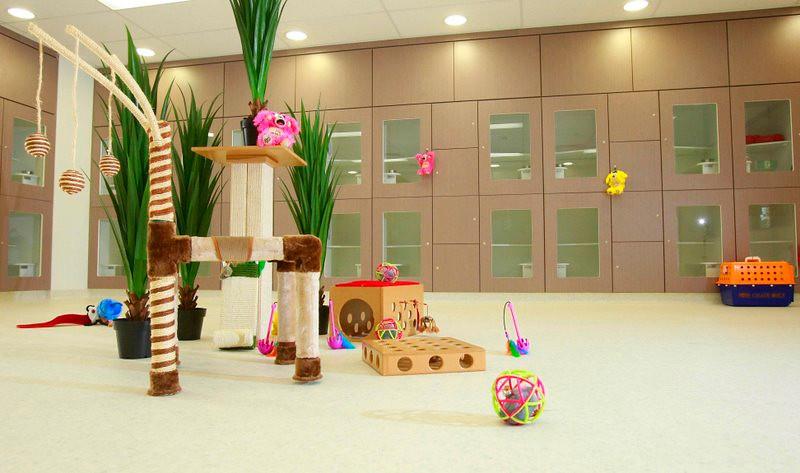 Kitty Kingdom with toys.jpg
