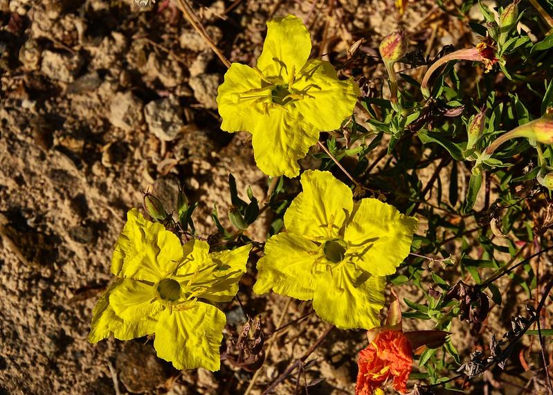 NEA_0853-7x5-Flowers.jpg