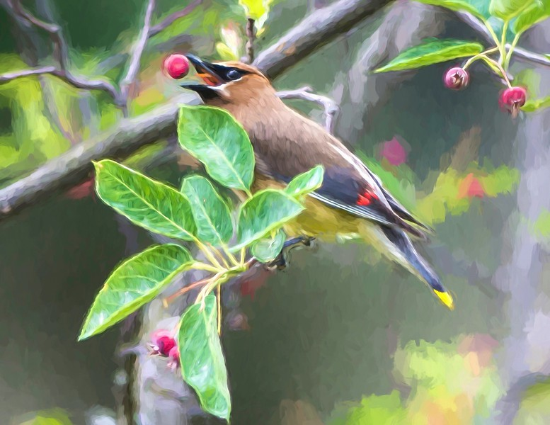 waxwing w apple monet.jpg