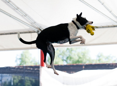 Big Air Dogs May 23,2010