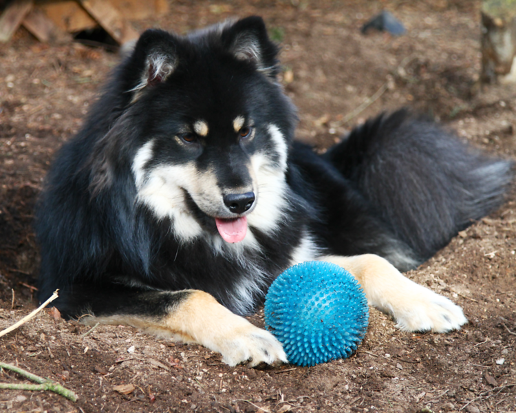 Onni in his burrow with his favorite PetCo ball