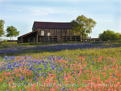 Bluebonnet Country