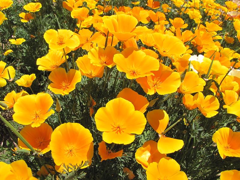 amh FLOWERS (1024).jpg