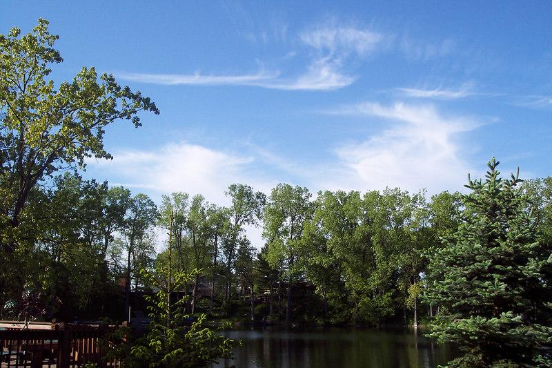 trees 060.jpg