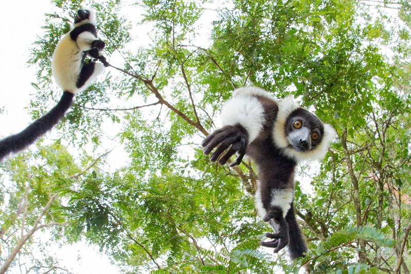 Madagascar_2013_FH0T8964.jpg