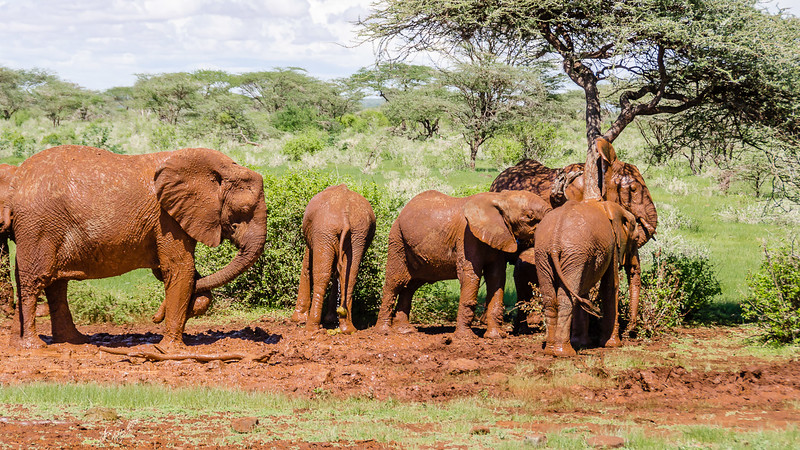 Elephants-0212.jpg