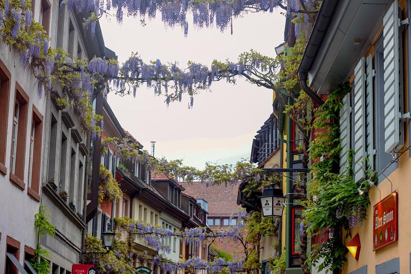 Wisteria vines on a street in Freiburg