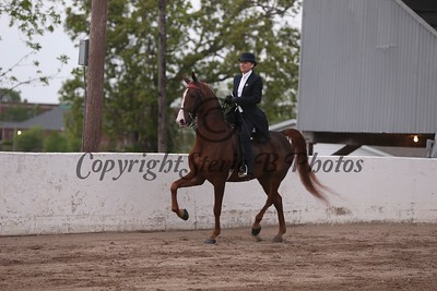 13. Adult 3 Gaited Country Pleasure