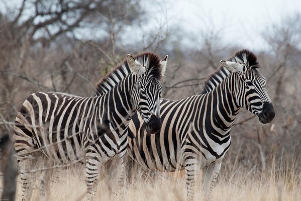 Africa Kruger 2011
