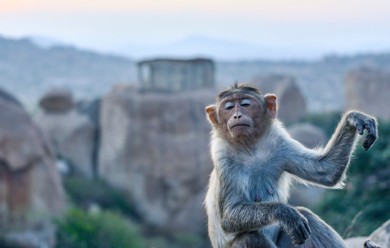 Yogic-moves-Macaque-Hampi.jpg