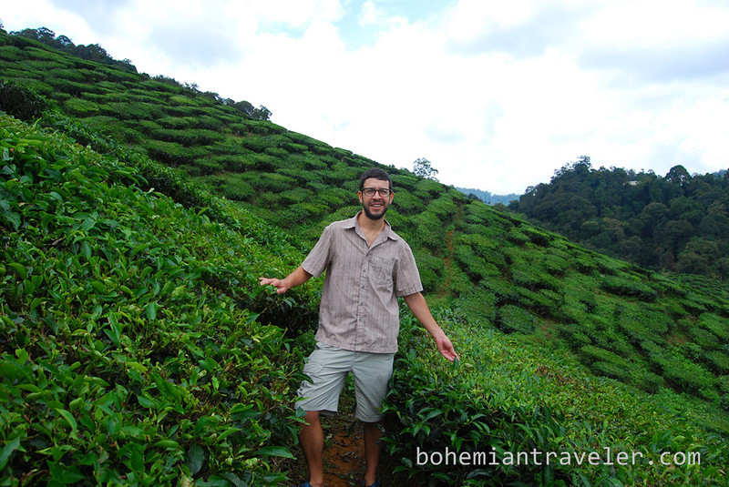 Stephen in the tea fields.jpg