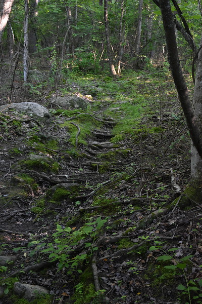 2019_06_26 CS Trail (58).JPG