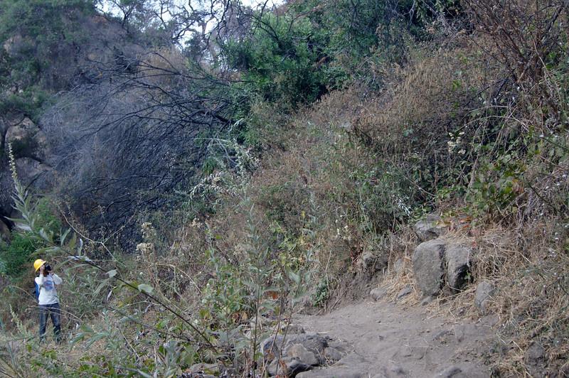 20110825022-El Prieto Trailwork Banner.JPG