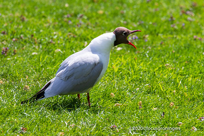 Vogels Meeuwen