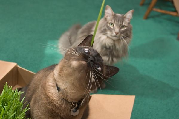 2005: Mushu and Meeko