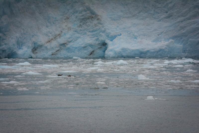 Kenai-Fjords-135.jpg