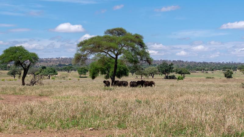 Tanzania-Tarangire-National-Park-Safari-Elephant-19.jpg