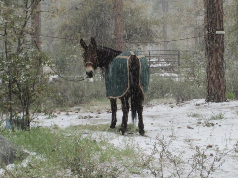 Sondra's Mule