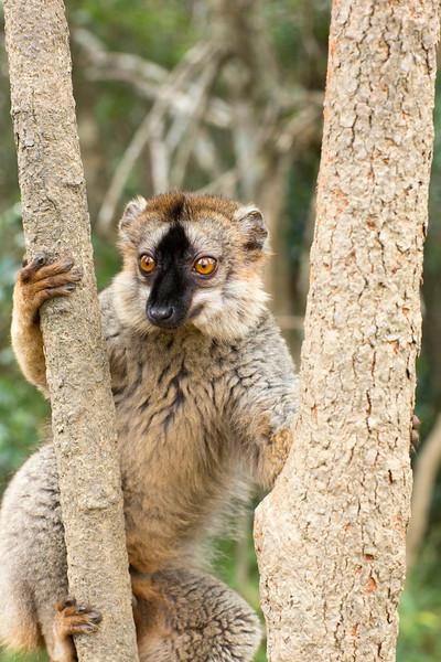 Madagascar_2013_IG3A2317.jpg