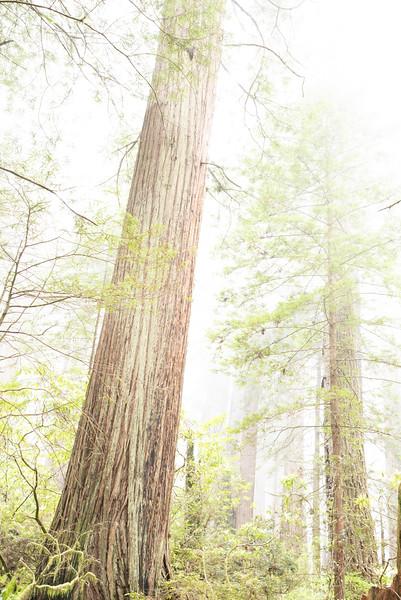 redwoodsFin29-1204.jpg