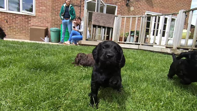 Puppies 17th May 2020.mp4