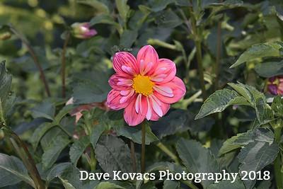 Longwood Gardens - 7-10-18
