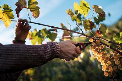 Swiss vineyards - Monocle magazine