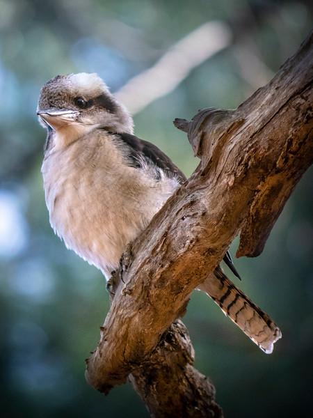 20180519 Birds  1877  .JPG