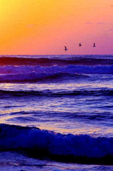 Iwa at sunset, oceanKauai.jpg